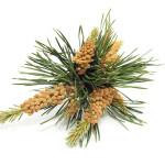 Bachbloesem Pine: sorry