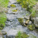 Bachbloesem Rock water