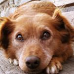Homeopathie voor honden