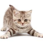 Bachbloesems voor katten