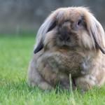 Stress bij konijnen? Bachbloesems helpen!