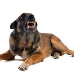 Bachbloesems voor honden tijdens het autorijden