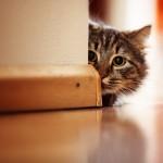 Bachbloesems voor de rouwende kat