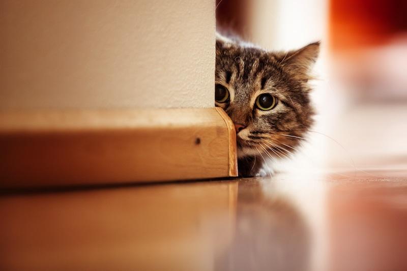 bach bloesem voor katten
