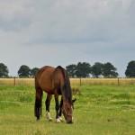 Bachbloesem en de dosering voor paarden